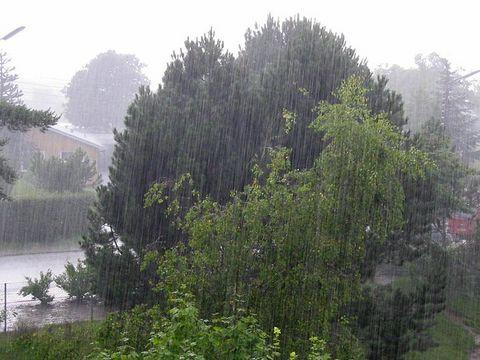 22_Regen_ubt.jpeg.jpeg